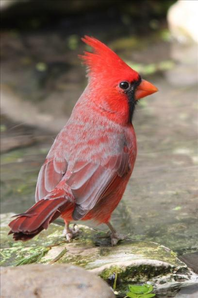 <a  href=&quot;http://share.valleycentral.com/Media/View/3032785&quot;>Thirsty Cardinal</a>