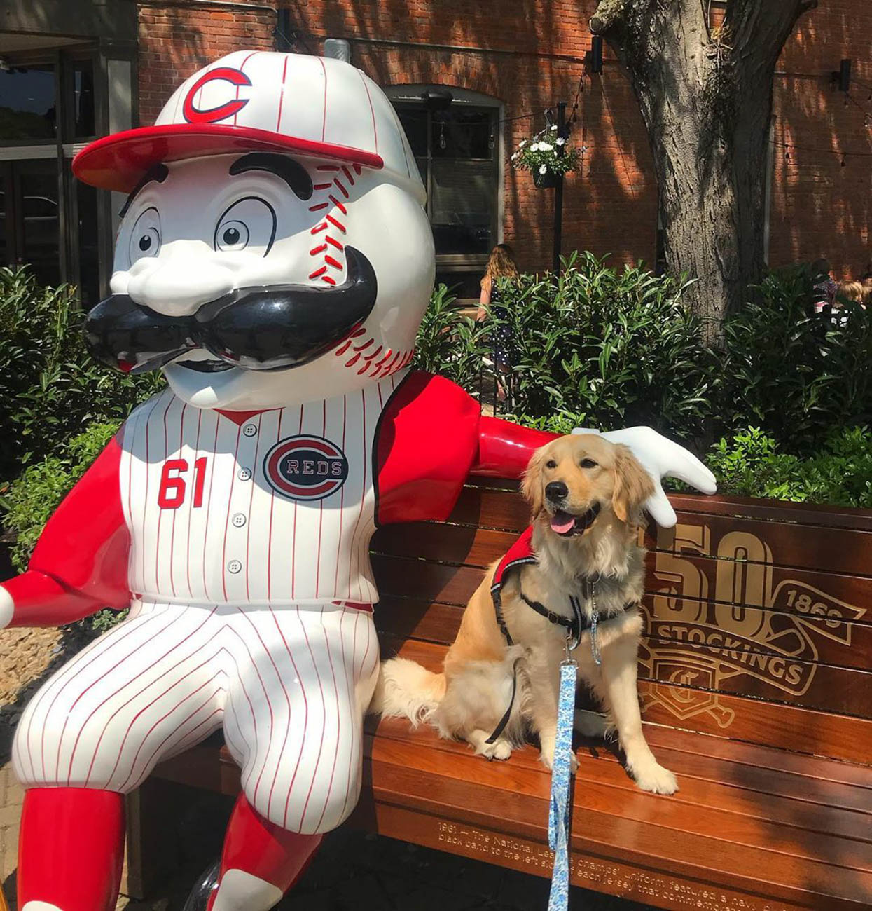 To celebrate the Reds' 150th Anniversary, 24 benches featuring Mr. Redlegs sculptures have been added to various spots around the area, as well as out of town locations including Dayton, Loveland, and Louisville, for the perfect Reds photo op. The mascot sports different uniforms from throughout the team's history at each of the benches. The Reds have been wearing these same throwback uniforms during their 2019 season. / Location: Bike Path in Downtown Loveland / Uniform: 1961 / Image courtesy of Instagram user @magby4paws   // Published: 5.14.19
