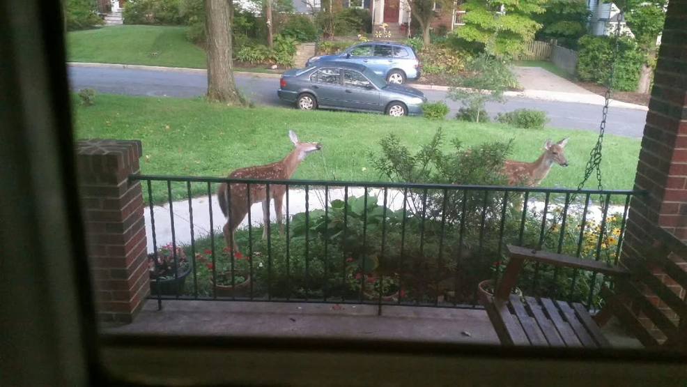 Keeping Deer Out Of Your Yard With Deer Resistant Plants