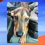 Puppy gets second chance at life after deputy found it in dumpster
