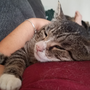 Cat shot, left for dead in Albany on the mend in new loving home