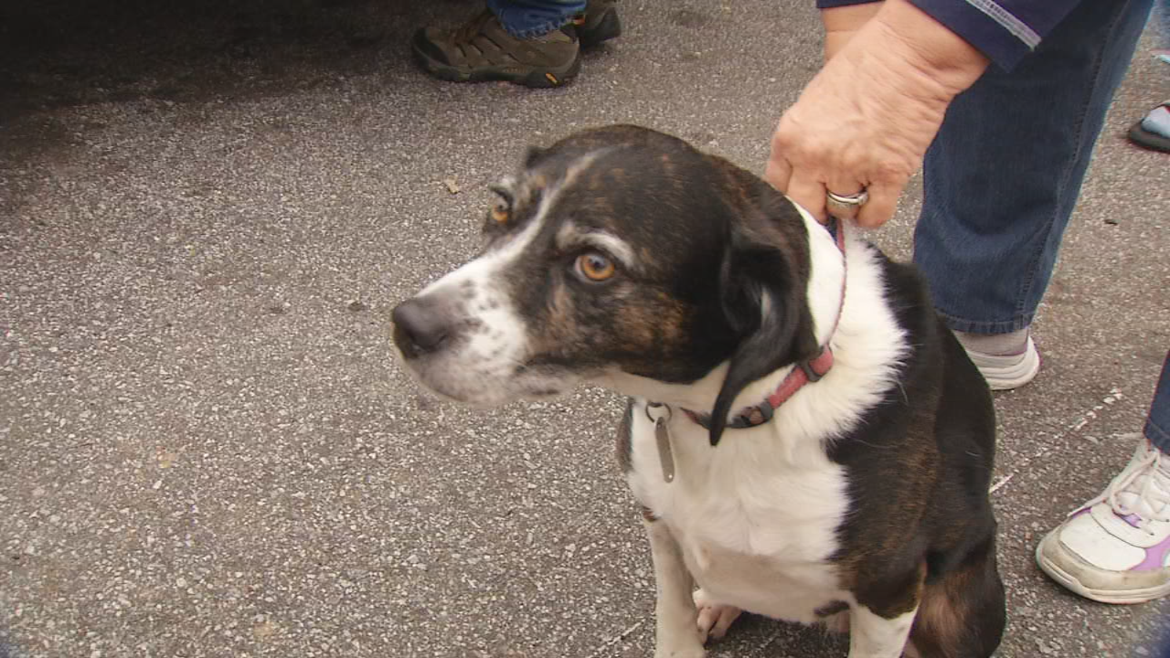 A Candler, N.C. family had a frightening morning when their car caught fire with their dog trapped inside. (WLOS)