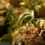 Expert: Marijuana black market set to grow until Utah starts selling cannabis
