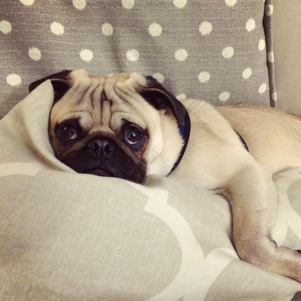 IMAGE: IG user @meetmrmoose / POST: I wish my mom would hurry up and feel better #imbored #givemecookies