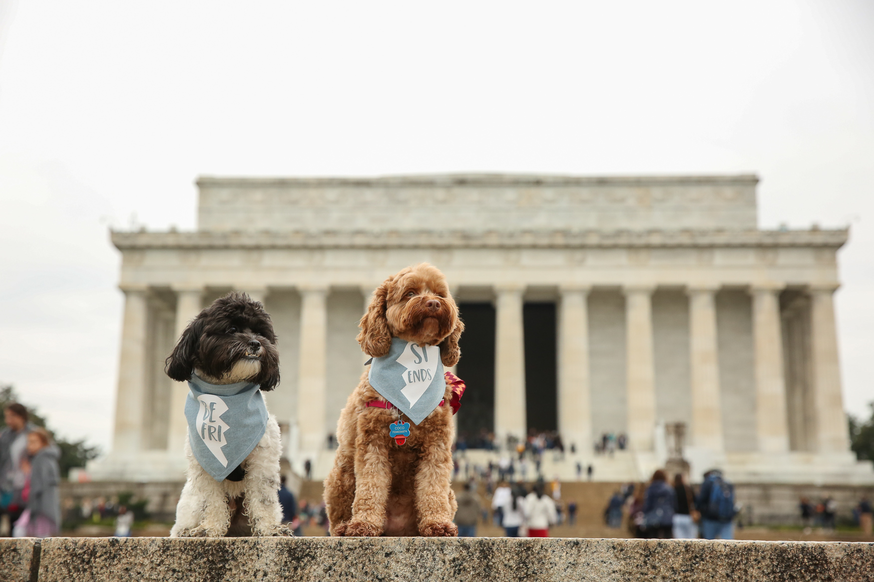 Every week we feature a reader's pet in our DC RUFFined photo gallery and we're looking for more dogs! Whether your dog is young, old, purebred, a mutt or anything in between, we would love to include them. To participate, you must be able to meet our photographer in the D.C. area and your pup must be trained enough to sit and not bite (other than the occasional puppy nibble!). If you want to coordinate a photo shoot, which typically lasts 30-45 minutes,{ } email our photographer at aandrade@dcrefined.com with your location, availability and some information about your dog! (Amanda Andrade-Rhoades/DC Refined)
