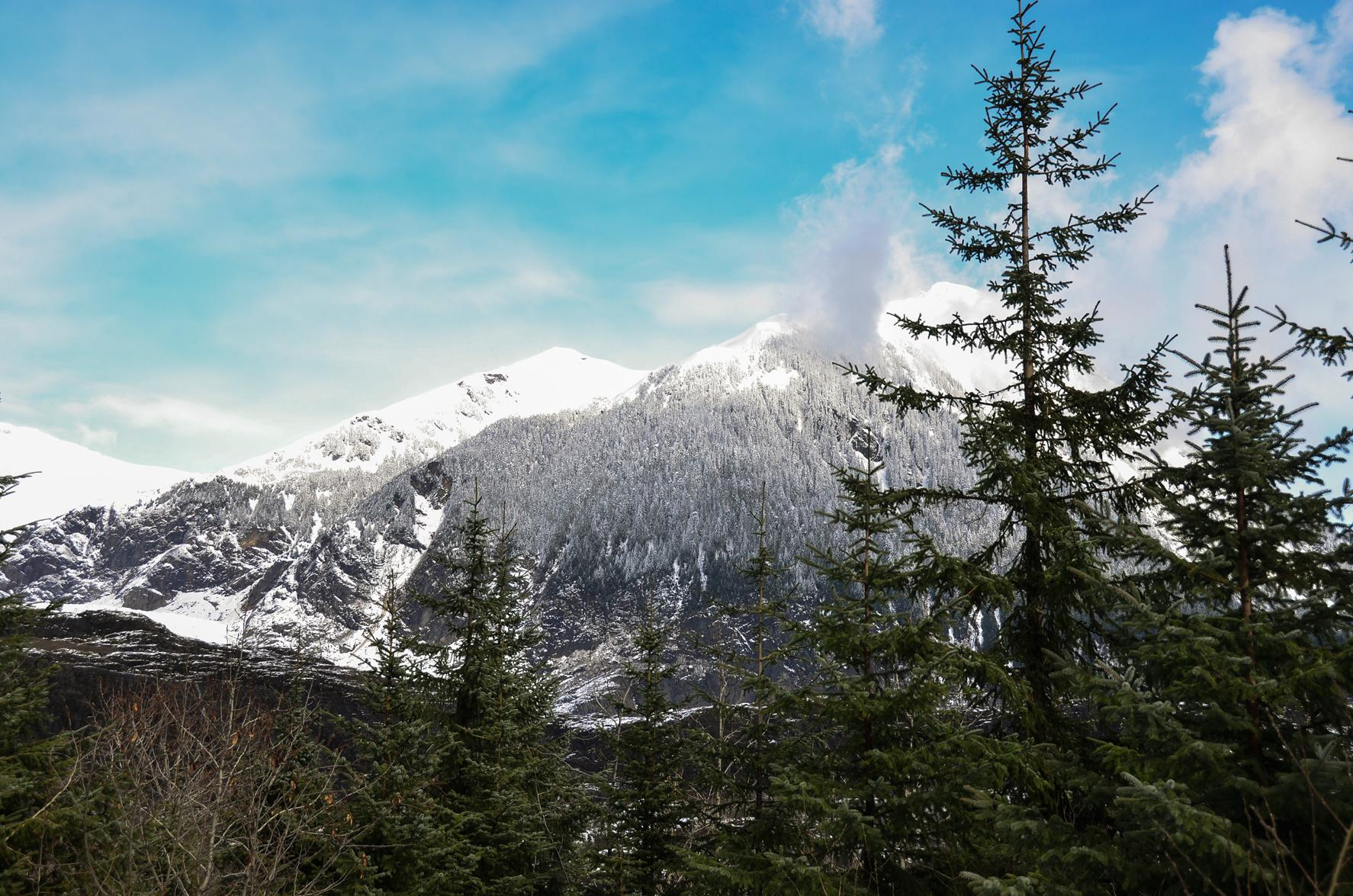 Winter in a Temperate Rainforest