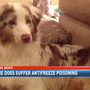 Daphne woman says her dog was poisoned with antifreeze