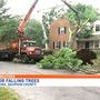 Central PA at risk for falling trees during severe weather