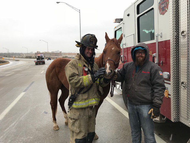 Firefighters wrangled horses following a crash in the westbound lanes of I-44 near the Belle Isle Bridge April 7. (Oklahoma City Fire Department)