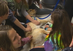 PKG SCHOOL THERAPY DOG.transfer_frame_3629.jpg