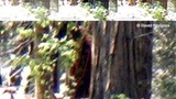 Bigfoot sighting reported in California