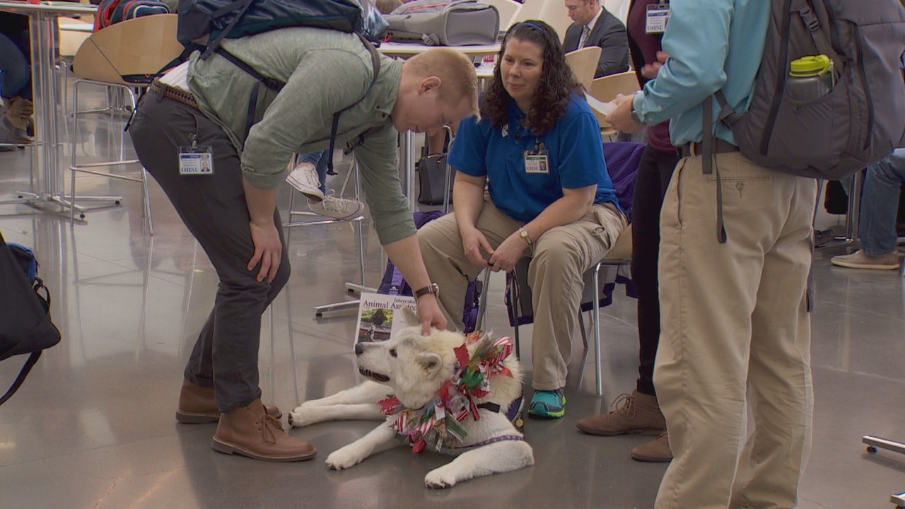 On most Fridays you can find Julie Burk and her akita Zipporah (zah-pour-ah) in the main lobby of the Collaborative Life Sciences building on the south waterfront. (KATU)