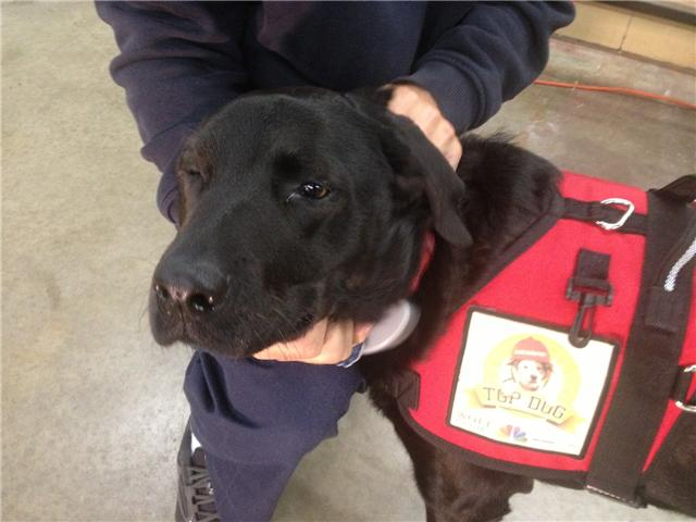 Smokey was chosen from more than a thousand entries nationwide as the top firehouse dog for the prime time show 'Chicago Fire.'