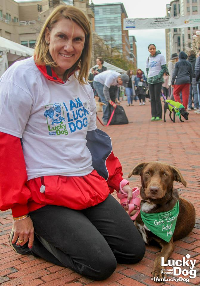 Lucky Dog relies on volunteers in so many different ways. Volunteers can be adoption coordinators, handle the lovable pets at adoption events, foster dogs and cats until they have adopters and much more.{ } (Image: Courtesy Lucky Dog Animal Rescue)