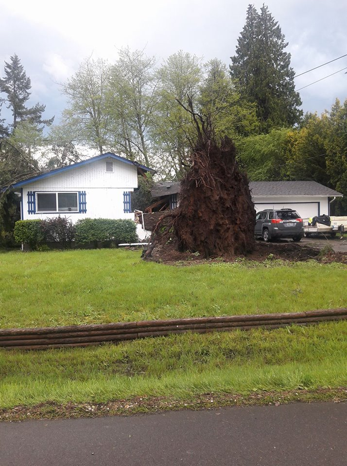 Tree crashes into house in the Lacey area. (Colleen Bartz)