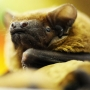 Where to find key information about bats after one found dead in Bmt home