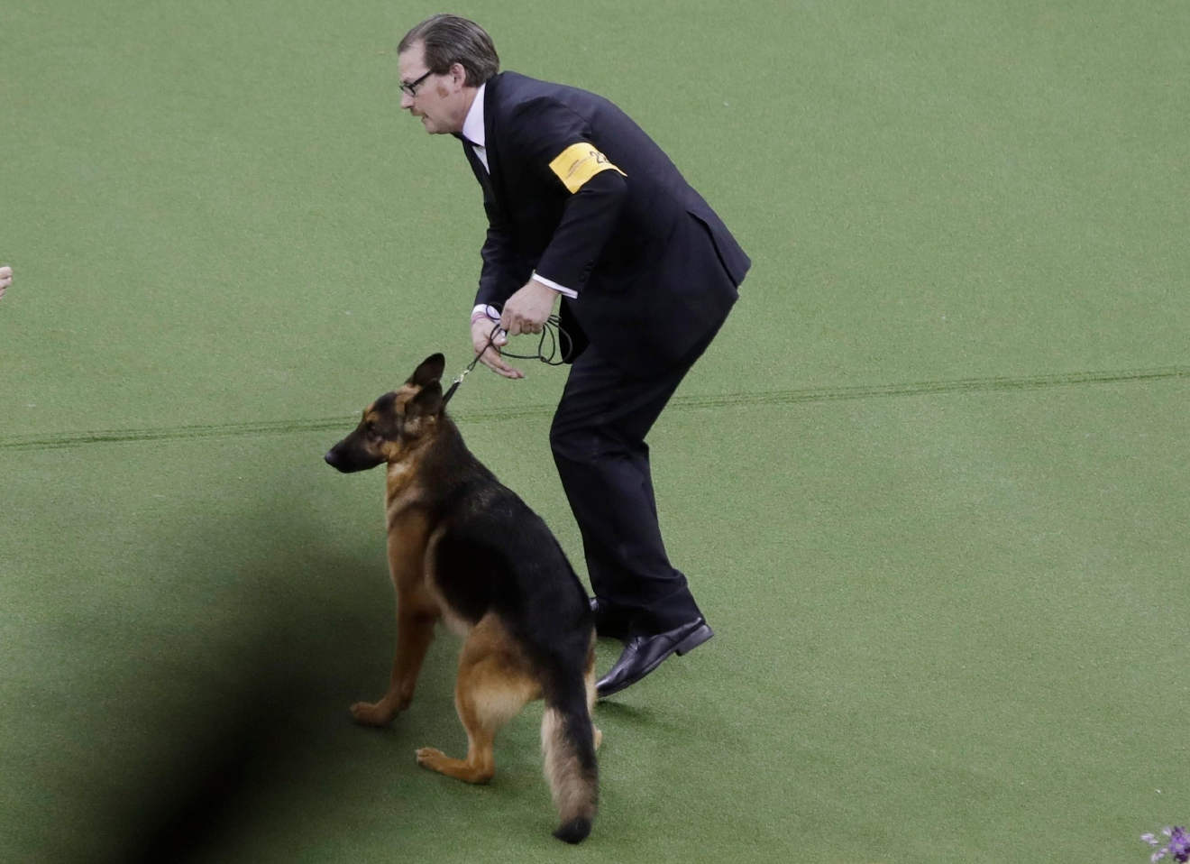 A handler reacts after Rumor, a German shepherd, won Best In Show at the 141st Westminster Kennel Club Dog Show on Tuesday, Feb. 14, 2017, in New York. (AP Photo/Frank Franklin II)