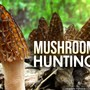 Helpful tips for mushroom hunting in West Michigan