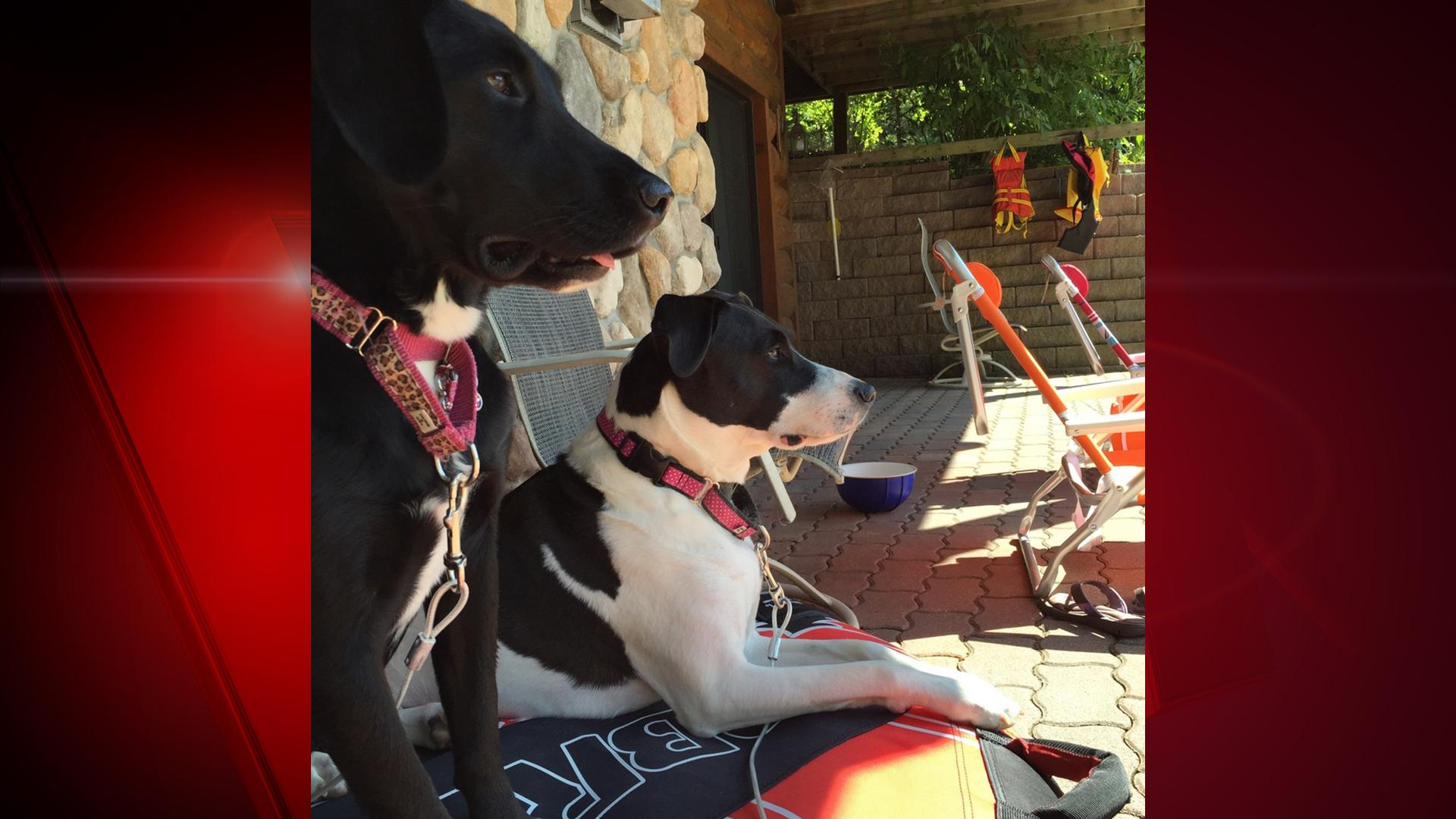 Meet FOX 11 news reporter, Eric Peterson's dogs. Ellie is a 3-year-old lab mix and Morgan is a 5-year-old hound terrier mix. (WLUK/Eric Peterson)