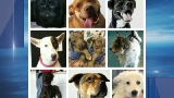 Animal Welfare League of Queen Anne's County bringing in dogs from New Orleans area