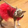 Dogs and their owners bond at doggy prom
