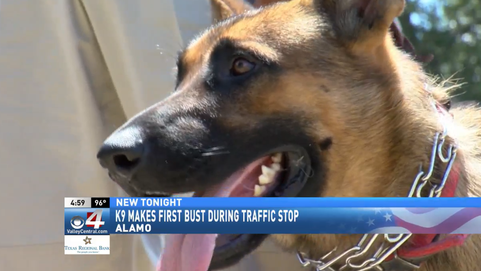 Two charged in connection with Alamo K-9 bust | KGBT