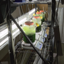 University of Toledo begins research on producing fuel from algae