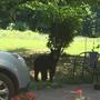 Bear aware: LPD reminds residents to keep food sources picked up amid bear sightings