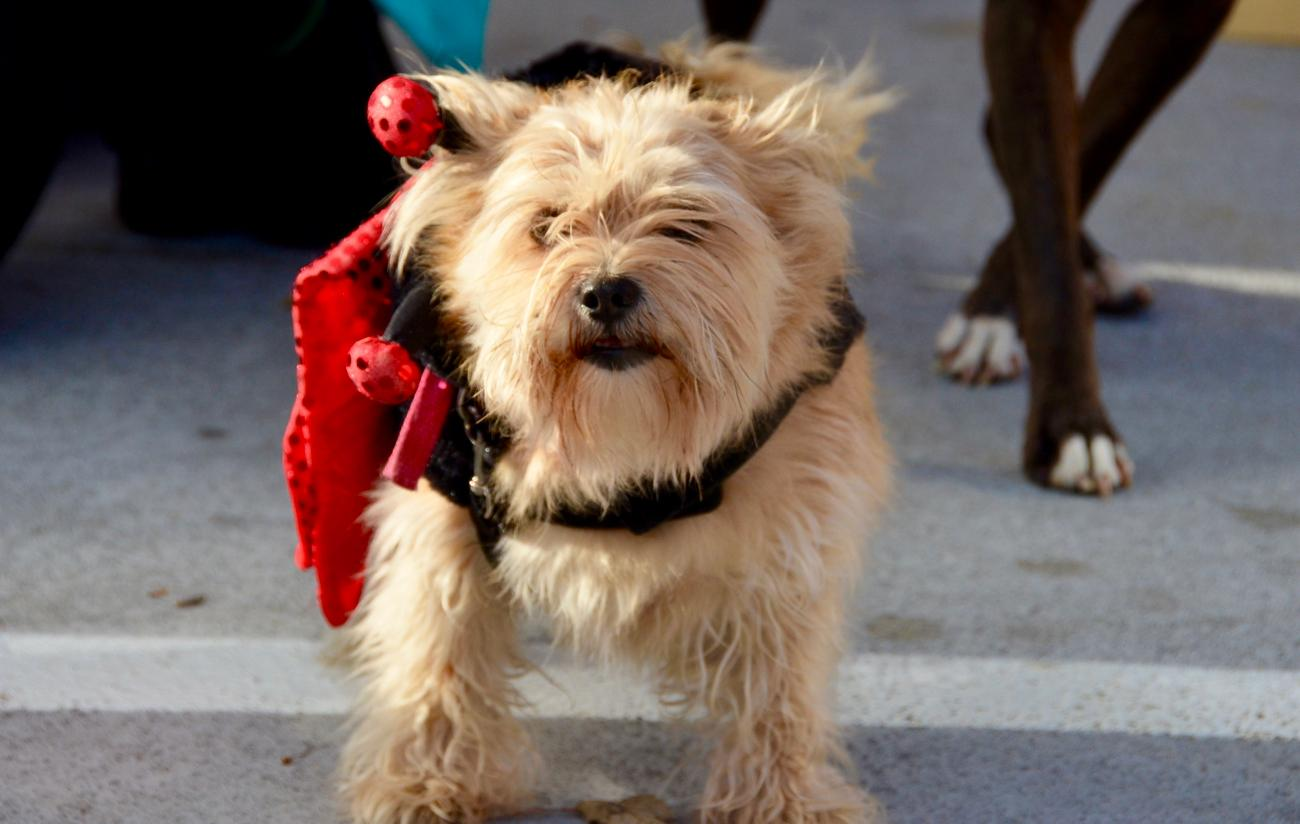 The Mt. Adams Reindog Parade took place on Saturday, Dec. 10. / Image: Leah Zipperstein, Cincinnati Refined