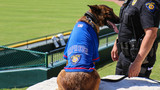 Round Rock Express donate K9 unit to RRPD