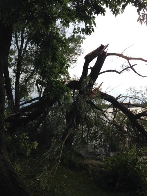 Aug. 14: Tree damage at Voyager Park in De Pere. (Submitted by Eliza)