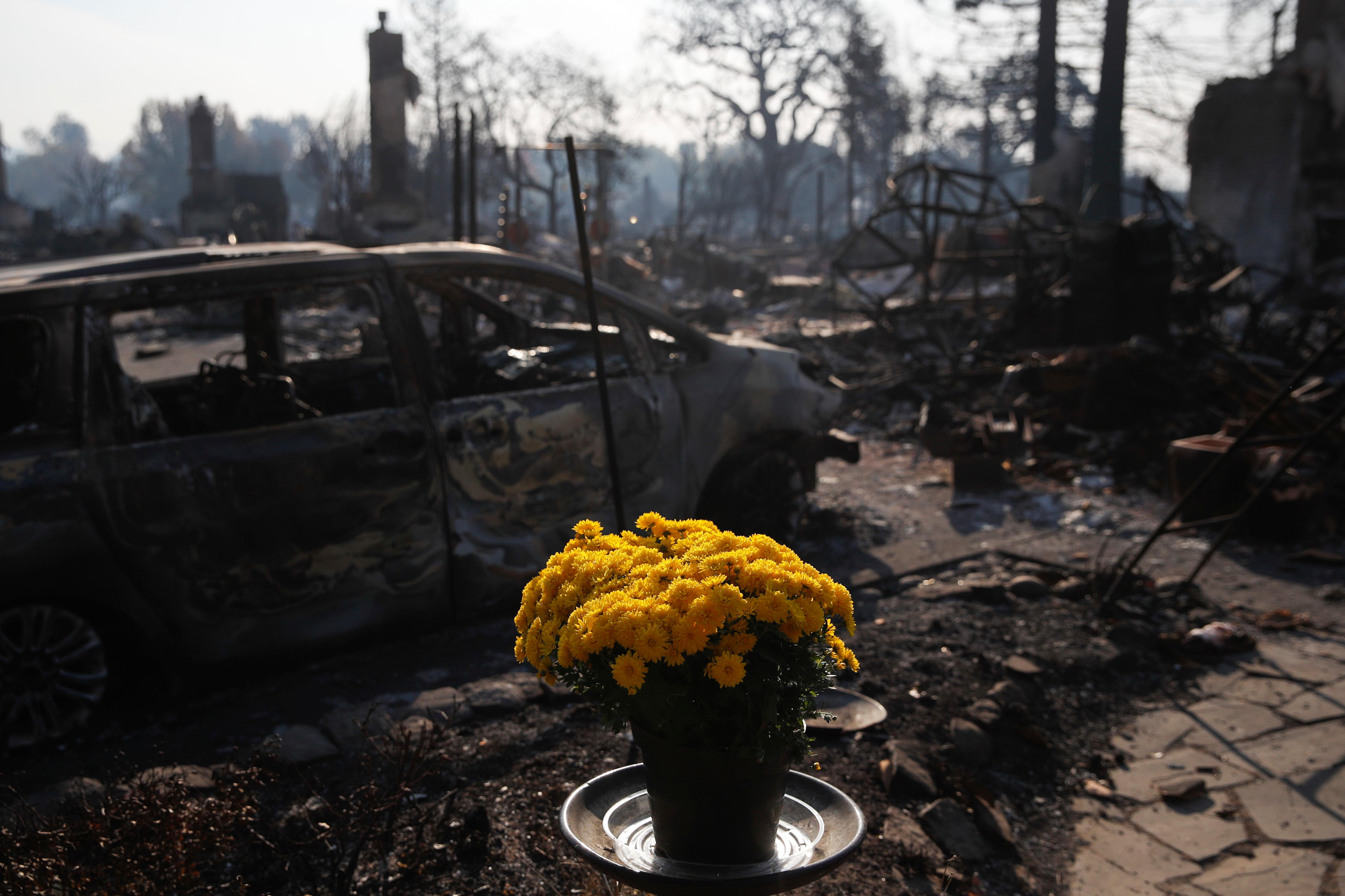 Fresh flowers are placed, Sunday, Oct. 15, 2017, in the Coffey Park neighborhood in Santa Rosa, Calif., that was devastated by a wildfire. A state fire spokesman says it appears firefighters are making good progress on deadly wildfires that started a week earlier, devastating wine country and other parts of rural Northern California. (AP Photo/Jae C. Hong)