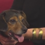 HSSJC Pet of the Week: Gertie