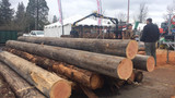 Oregon Timber seeing increase in demand thanks to strong housing market