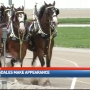 Budweiser Clydesdales stop in Lebanon as part of Miami Valley Gaming Heroes Night