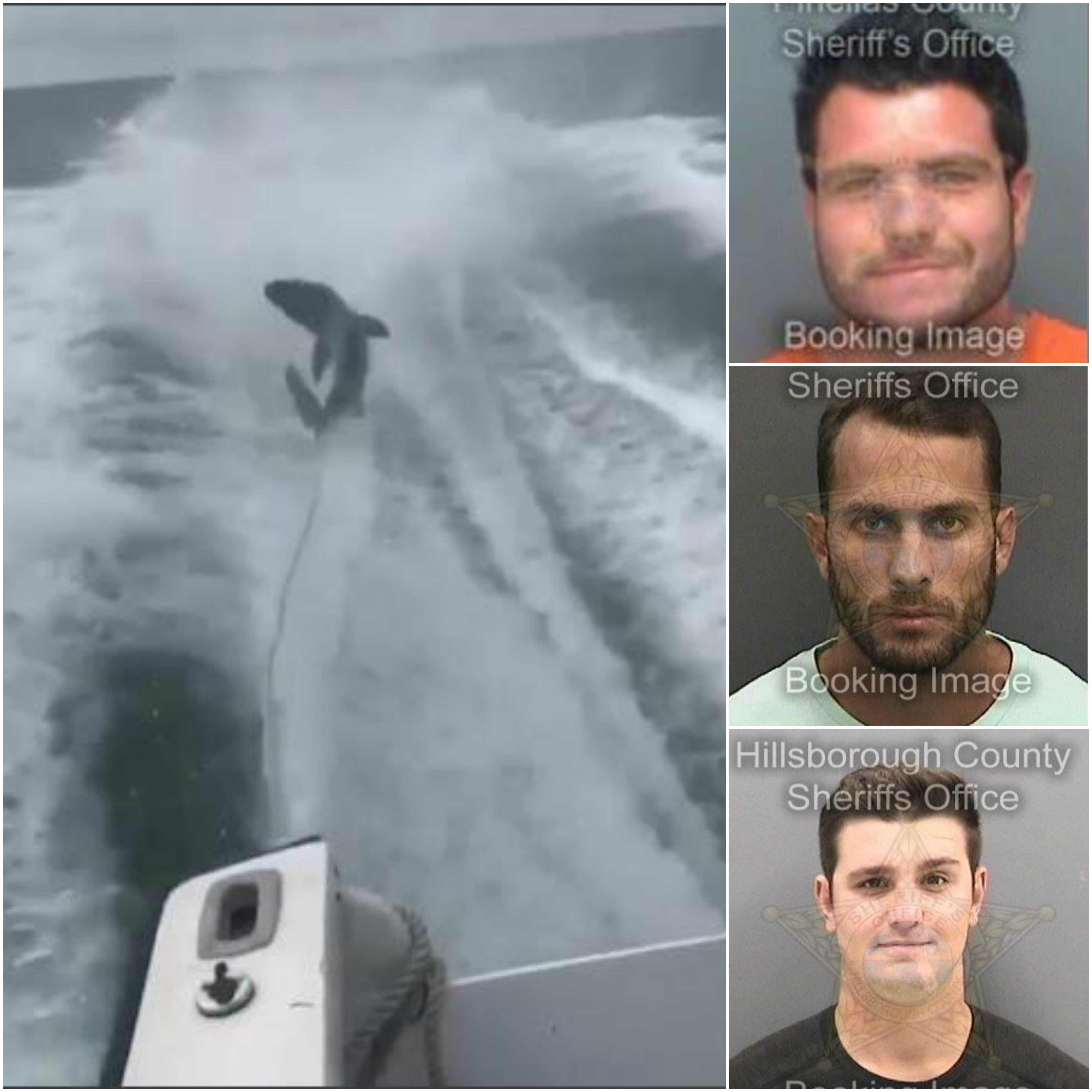 Photo (clockwise): Micheal Wenzel, Robert Lee Benac, Spencer Heintz, still image from video of shark-dragging Source: Pinellas County Sheriff's Office / Pinellas County Sheriff's Office