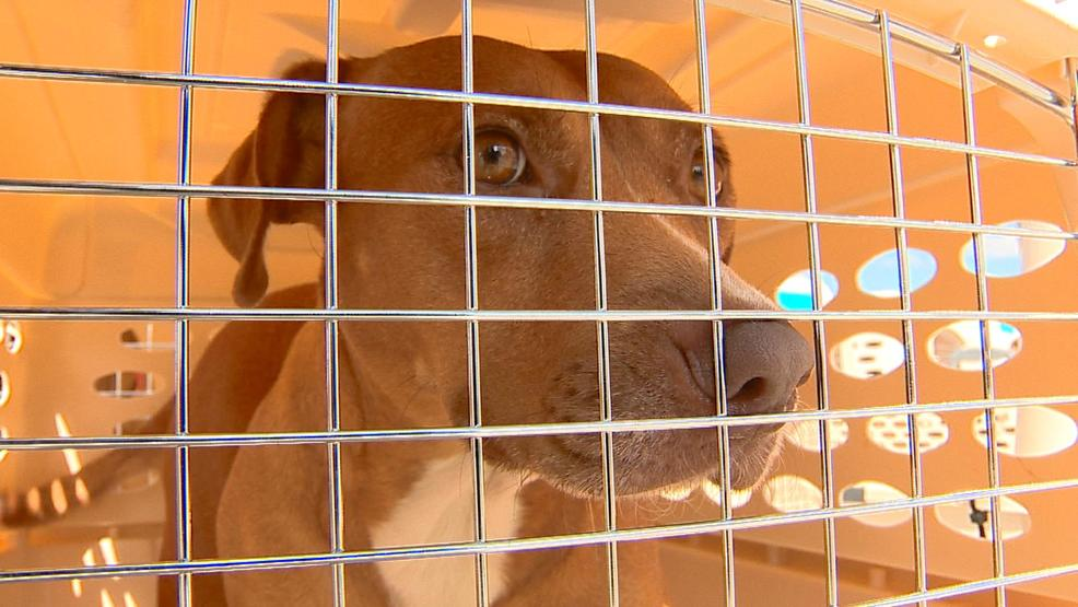 Decenas de perros llegan en Fox Valley de Houston | WLUK - Fox11online.com 1
