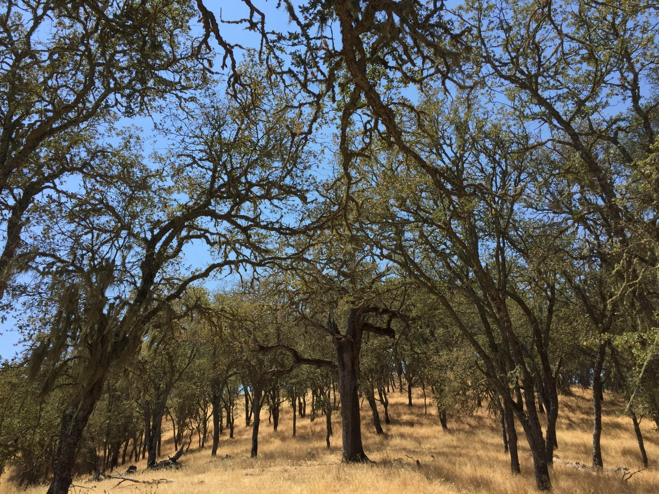 The scenery at Santa Margarita Ranch is fantastic from every vantage point.