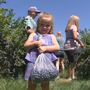 Berry picking season kicks off