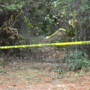Gender still unknown for skeletal remains in Jasper County