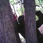 Video shows man with hands nailed to tree over bad real estate deal
