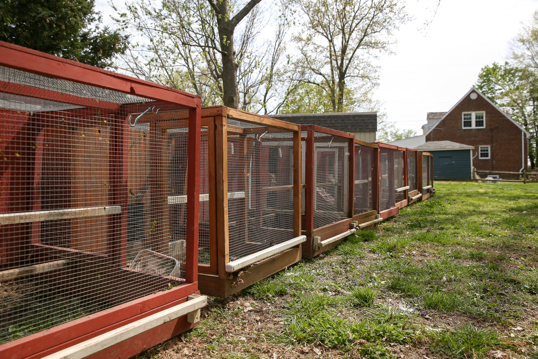 It sounds like an idyllic scenario reserved for folks who live out in the countryside, but now aspiring urban farmers can get clucky, too. (Image: Amanda Andrade-Rhoades/ DC Refined)