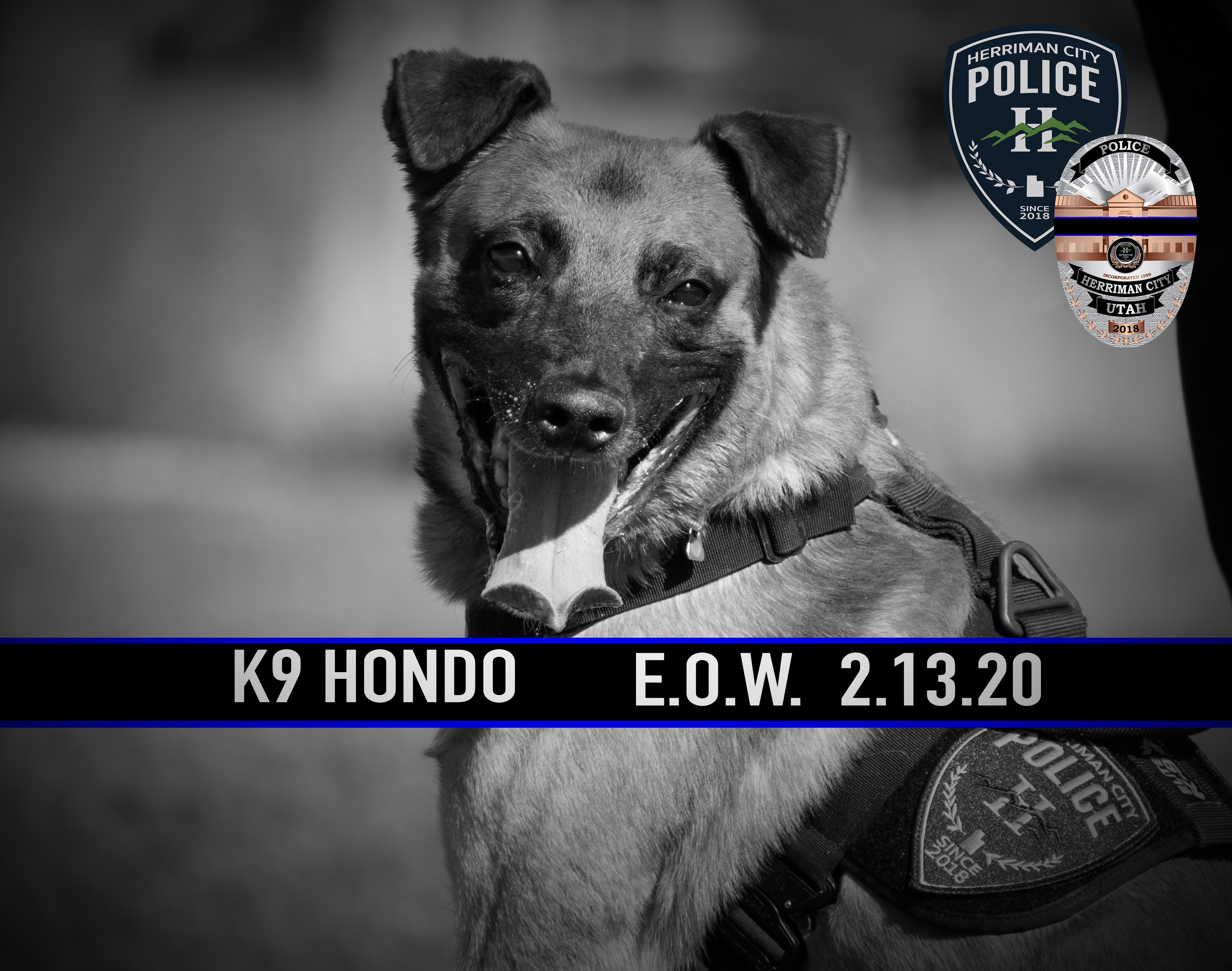 K9 Hondo was killed in the line of duty during a fugitive apprehension operation in Salt Lake City on Feb. 13, 2020. (Photo courtesy Herriman City PD)