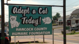 Hancock County Humane Foundation opens cat rescue facility