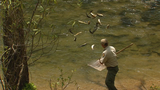 WV Wildlife:  Back-Country Trout Stocking by Rail