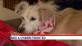 Long Lost Dog Back Home After 8 Year Mystery Tour of Boca