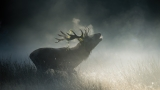 UK photos offer awesome glimpse into animal world