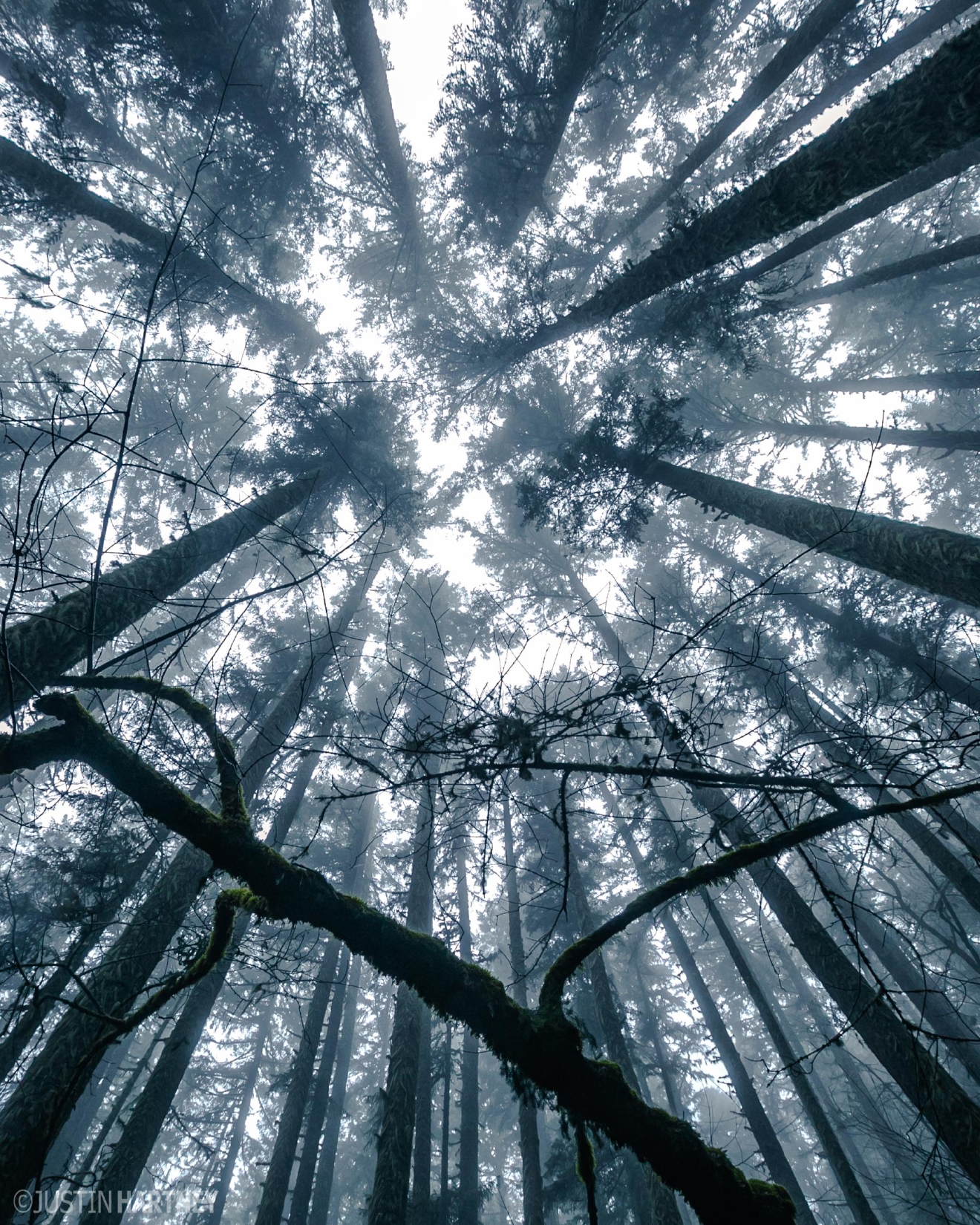 Foggy Forest at Spencer Butte Eugene, Oregon  Photo by Justin Hartney