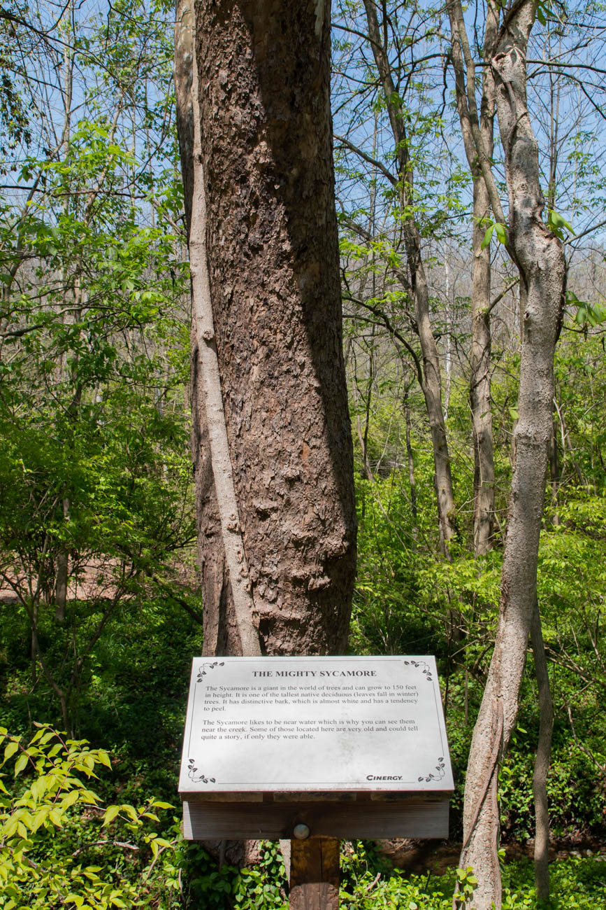 Signposts located throughout the space educate hikers about the trail, the various tree species found within them, and information about the Eagle Scout projects that provided the signposts themselves. / Image: Elizabeth A. Lowry // Published: 5.12.20