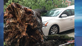 STORM STRIKE: Downed trees cause damage in Canton